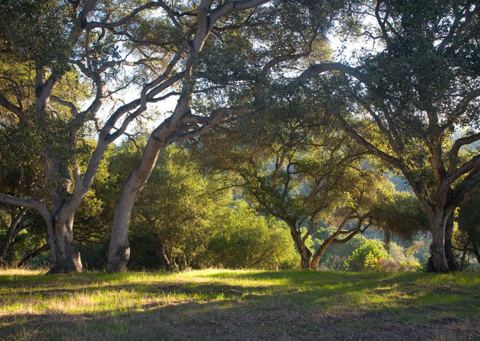 Oak Grove of 8.02 Acre parcel for sale in Hope Ranch for $4,950,000 - Listed by Thomas C. Schultheis, Broker Associate at Berkshire Hathaway